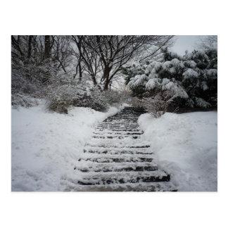 Snow Covered Central Park NYC Landscape Postcard