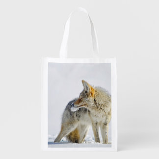 Snow-covered Coyote at Yellowstone Wildlife Tote