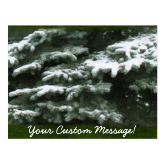 Snow-Covered Evergreen Branches Postcard