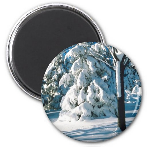 Snow Covered Evergreens Magnet