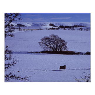 Snow covered fields containing sheep with the poster