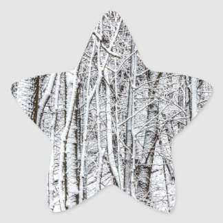 Snow Covered Forest #2.jpg Star Sticker