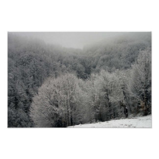 Snow Covered Forest Print