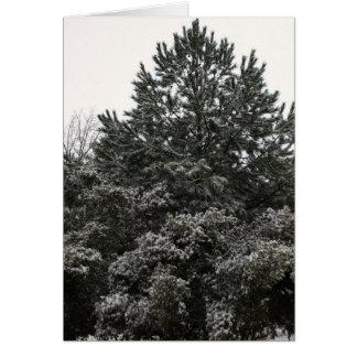 snow covered Georgia pine Card