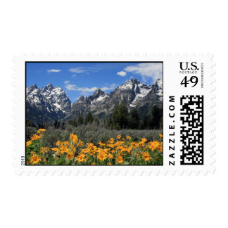 Snow Covered Grand Teton Range with Yellow Flowers Postage