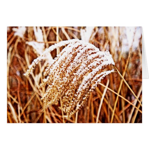 Snow Covered Grass Greeting Cards