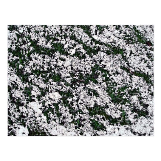 Snow Covered Ground Texture Postcard