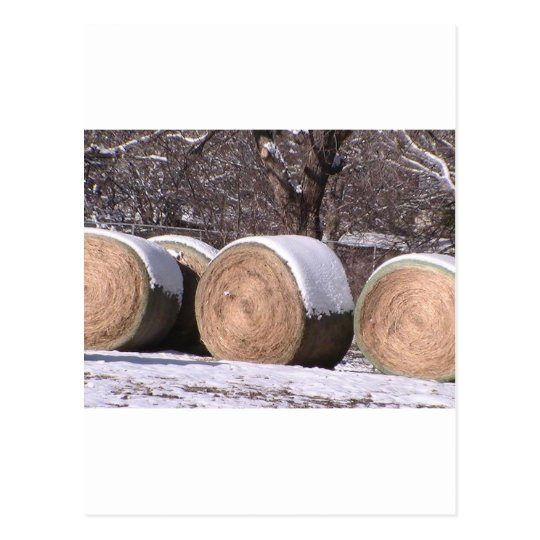 Snow covered hay bales postcard