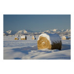 Snow-Covered Hay Bales Posters