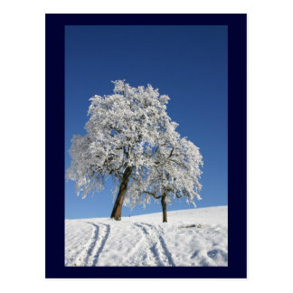 Snow Covered Hill And Trees Postcard