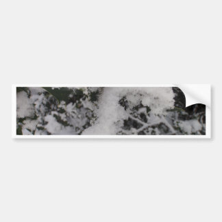 Snow Covered Holly Car Bumper Sticker