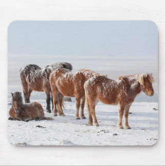 Snow Covered Icelandic Horses Mouse Pad