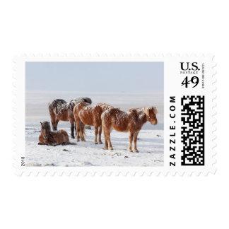 Snow Covered Icelandic Horses Postage