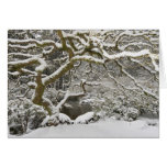 Snow-covered Japanese maple 2 Cards