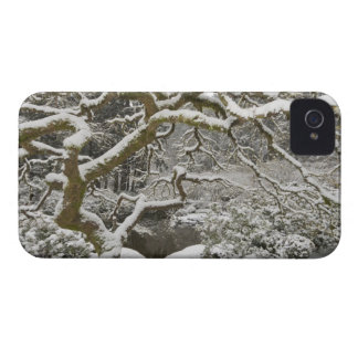 Snow-covered Japanese maple 2 iPhone 4 Cover