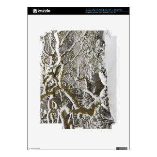 Snow-covered Japanese maple 2 Decal For iPad 3