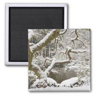 Snow-covered Japanese maple 2 Inch Square Magnet