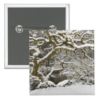 Snow-covered Japanese maple 2 Pinback Button