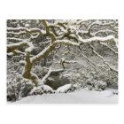 Snow-covered Japanese maple 2 Postcard