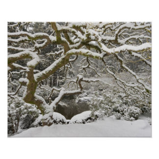 Snow-covered Japanese maple 2 Print