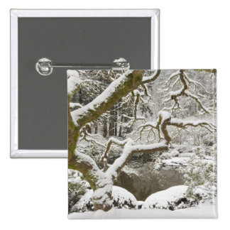 Snow-covered Japanese maple Pinback Button