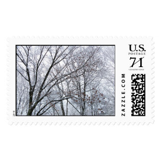 Snow-covered Oak Tree – Large Postage Stamp