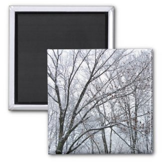 Snow-covered Oak Tree magnet