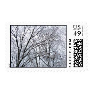 Snow-covered Oak Tree – Medium Stamps