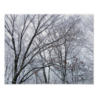 Snow-covered Oak Tree Poster