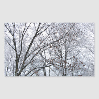 Snow-covered Oak Tree Rectangle Stickers