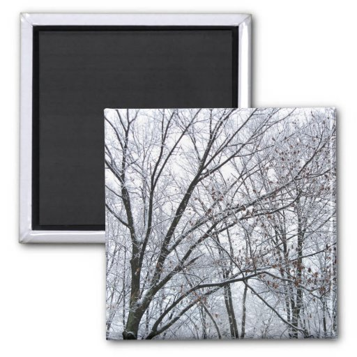Snow-covered Oak Tree Refrigerator Magnets