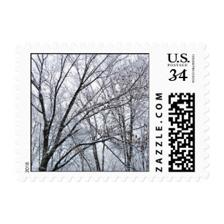 Snow-covered Oak Tree – Small Postage Stamp