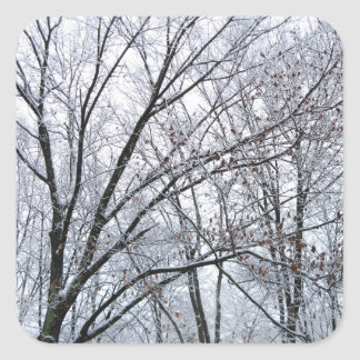 Snow-covered Oak Tree Stickers