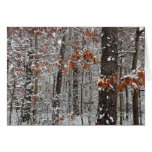 Snow Covered Oak Trees Winter Nature Photography Card