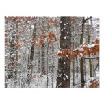 Snow Covered Oak Trees Winter Nature Photography Photo Print