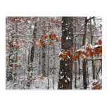 Snow Covered Oak Trees Winter Nature Photography Postcard