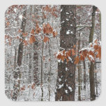 Snow Covered Oak Trees Winter Nature Photography Square Sticker