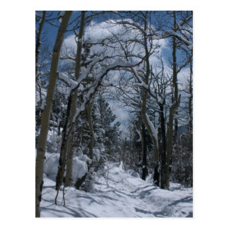 Snow covered path through the Rocky Mountains Postcard