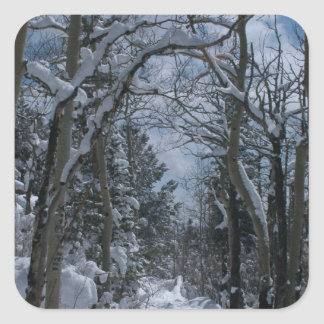 Snow covered path through the Rocky Mountains Square Sticker