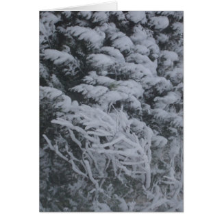 Snow  Covered Pine Branches Card