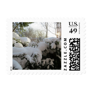 Snow Covered Pine Bush Postage