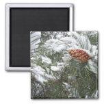 Snow covered pine cone. fridge magnets