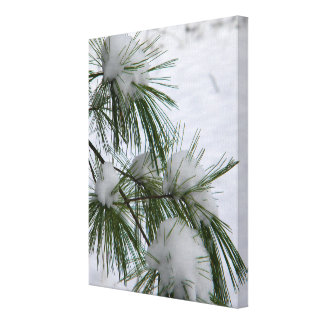 Snow Covered Pine Needles Canvas Print