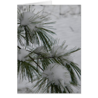 Snow Covered Pine Needles Card