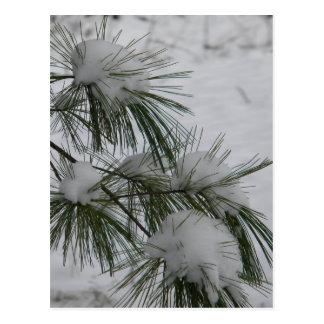 Snow Covered Pine Needles Postcard