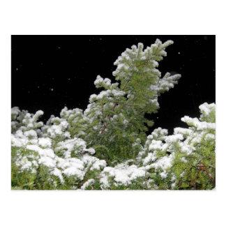 Snow Covered Pine Tree Postcard