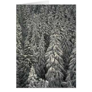 Snow-covered pine trees card