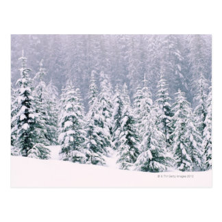 Snow covered pine trees postcard