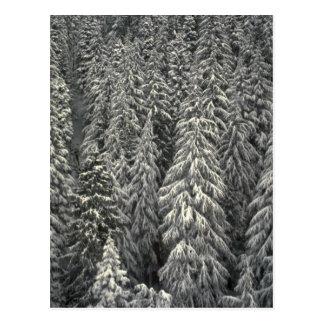 Snow-covered pine trees postcard