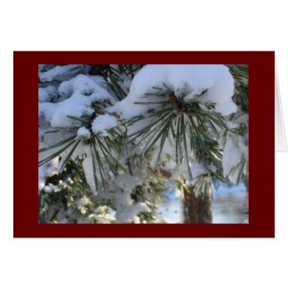 snow covered pines card